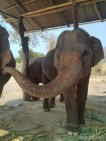Pai - elephants 3