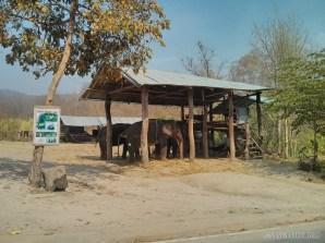 Pai - elephants 4