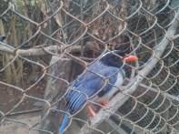 Pyin U Lwin - National Kandawgyi Gardens aviary bird