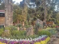 Pyin U Lwin - National Kandawgyi Gardens petrified wood museum 1