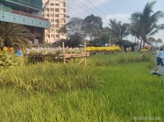 Saigon during Tet - flower street 29
