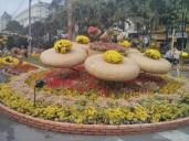 Saigon during Tet - flower street 7