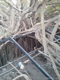 Tainan - tree house 1