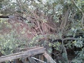 Tainan - tree house 4