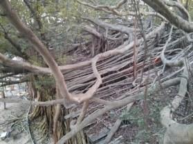 Tainan - tree house 5