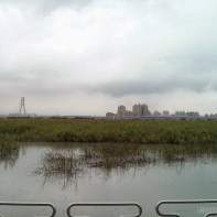 Taipei - wetlands 2