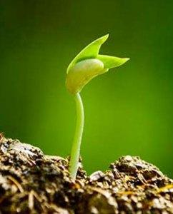 growing-in-faith
