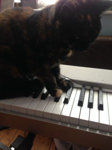 Picture of cat on a piano to accompany article on music for stretching