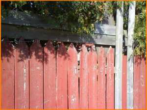 find the kitteh in fence