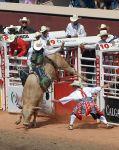 479px-Bull-Riding-Szmurlo