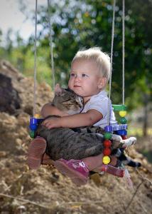 cat on swing