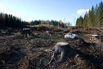 220px-Clearcutting_in_Southern_Finland