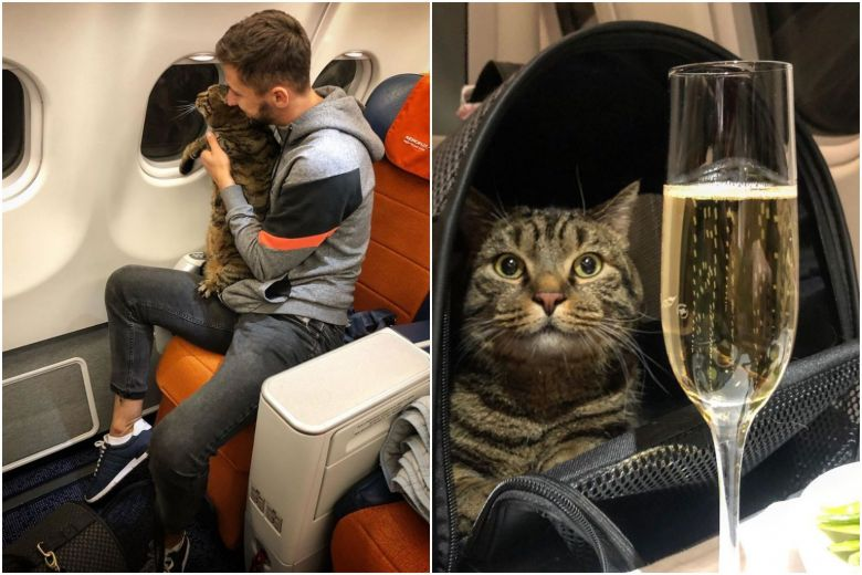 Airline Cracks Down On Fat Cats