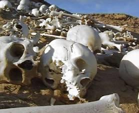 mass-grave-278x225.widec