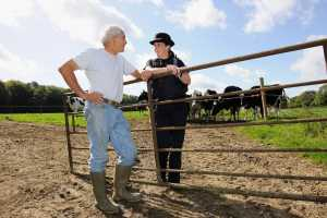 Police Officer and farmer with cows