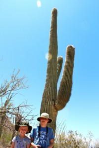Saguaro Pic