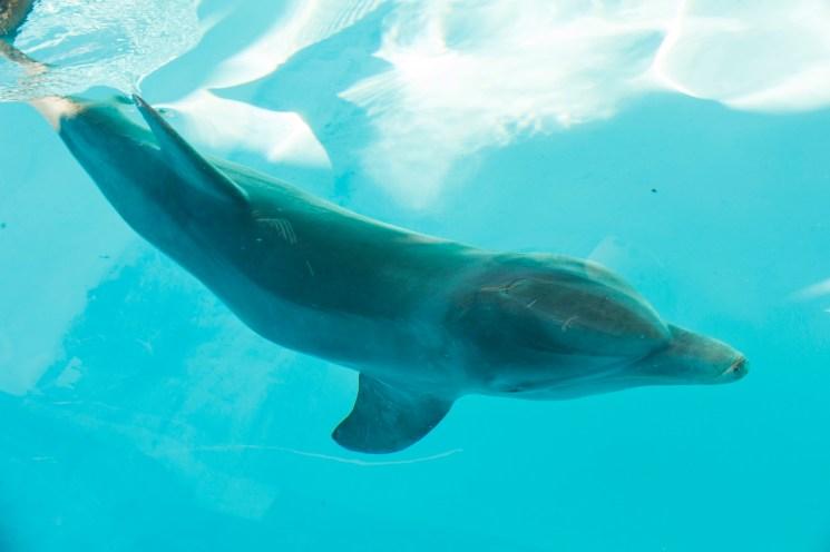Bottlenose Dolphin Rescue at SeaWorld Orlando