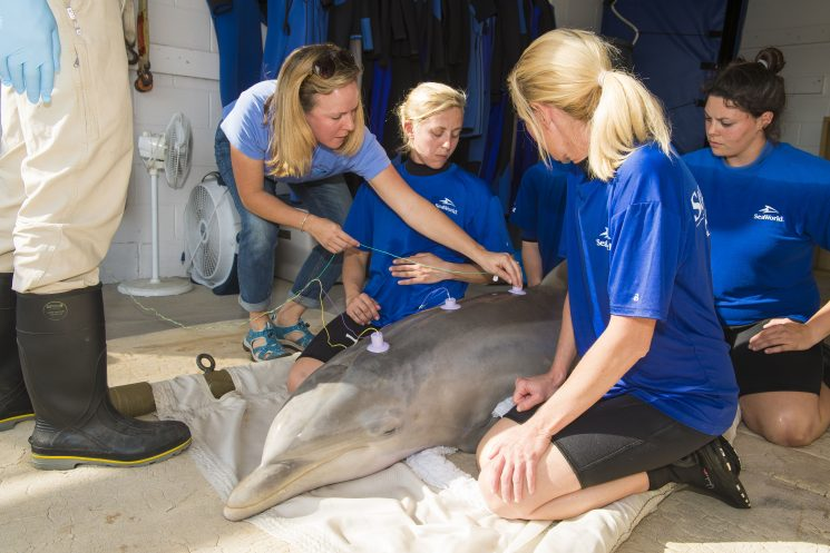 SeaWorld Orlando Rescue Team Aids with Hearing Test for Rescued