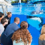 New Killer Whale Up-Close Tour at SeaWorld Orlando