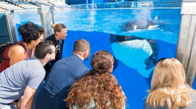 New Killer Whale Up-Close Tour at SeaWorld Orlando