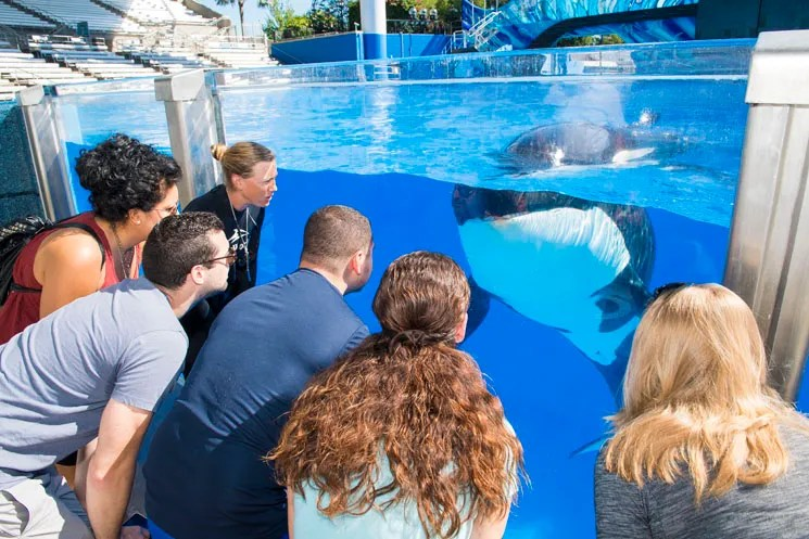 A new tour at SeaWorld Orlando invites guests to engage with the Park's killer whales, including meeting trainers and participating in a unique interaction.
