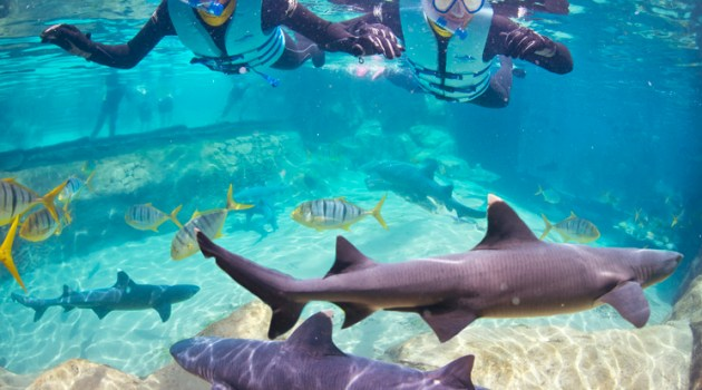Find out how guests can swim with sharks at Discovery Cove in Orlando in one of several all-new experiences that give guests up-close looks at animals.