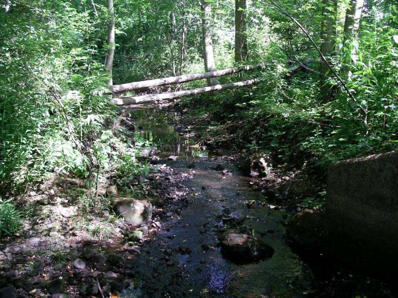 Jones River headwater 2005