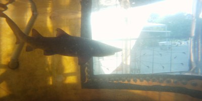 Shark tank 2010