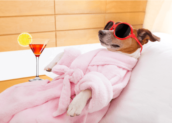 Wellness and finances dog #wellness #chien #relax #dogwithsunglasses