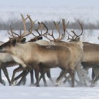 The Good Shepherd; Fourth Sunday of Easter