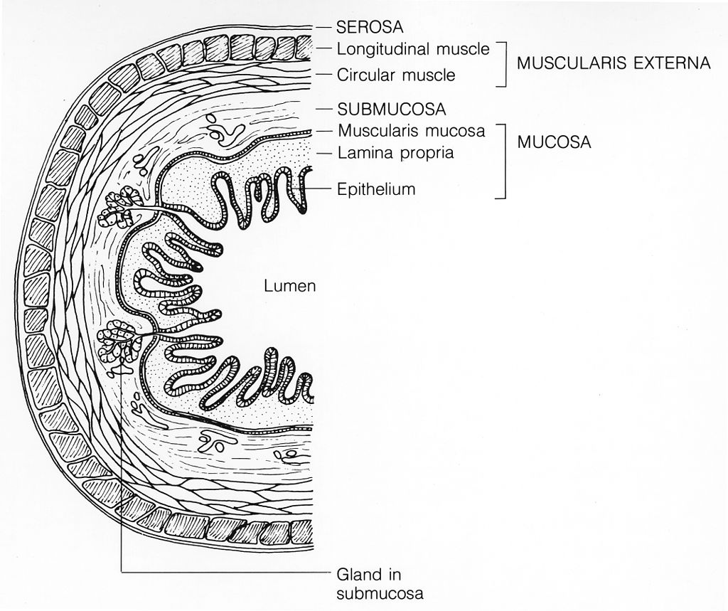 The Very Intelligent Intestine Epithelial Cell