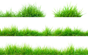 Grass Artistic plants