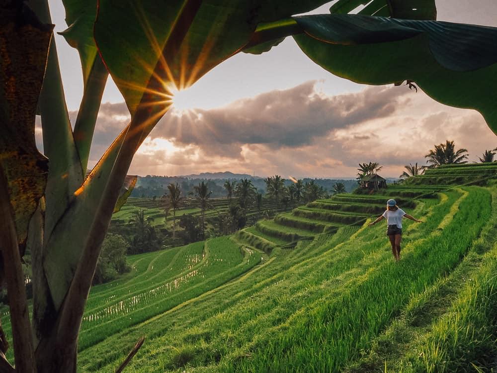 jatiluwih rice terraces, jatiluwih rice terrace bali, jatiluwih rice terrace, jatiluwih bali, jatiluwih unesco, jatiluwih bali, jatiluwih rice terrace unesco, jatiluwih, bali rice fields