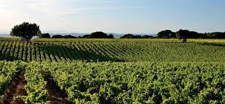 Les commerces viticoles : des produits locaux avant tout ! A consommer avec passion mais modération…