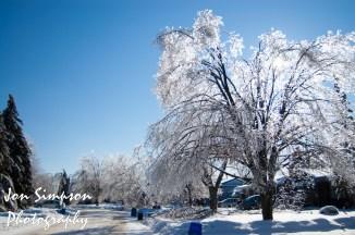 Ice Trees (10 of 15)