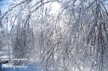 Ice Trees (13 of 15)