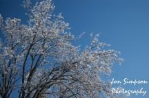 Ice Trees (4 of 15)