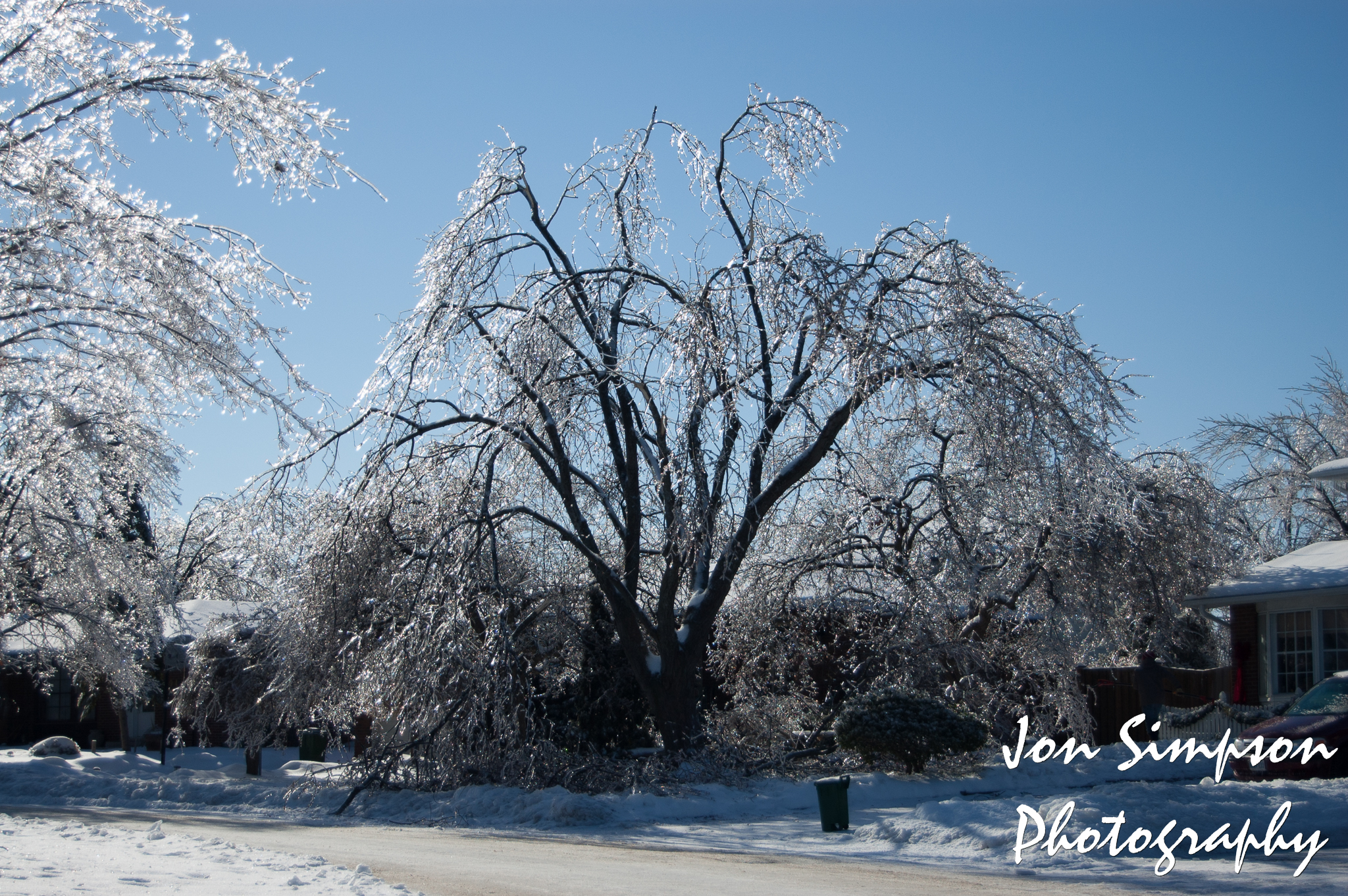 Ice Trees (8 of 15)
