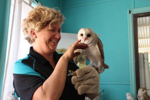 """Raptor rescuer Janelle Ende gives her new patient, 12 week old barn owl """"Willow"""", a well deserved scratch under the chin. Picture: Jon Solmundson"""
