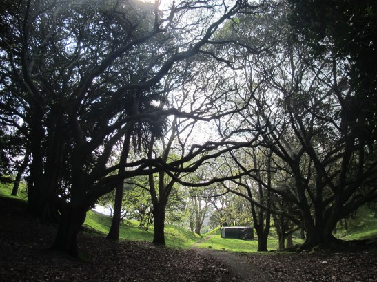 Mt Richmond Domain