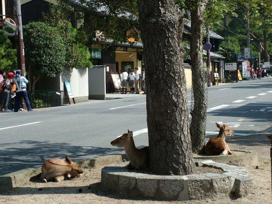 DSCF6079 Nara