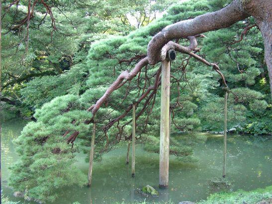 DSCF7266 Rikugi-en Gardens
