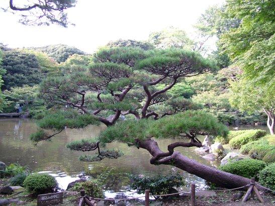 DSCF7295 Kyu Furukawa Gardens