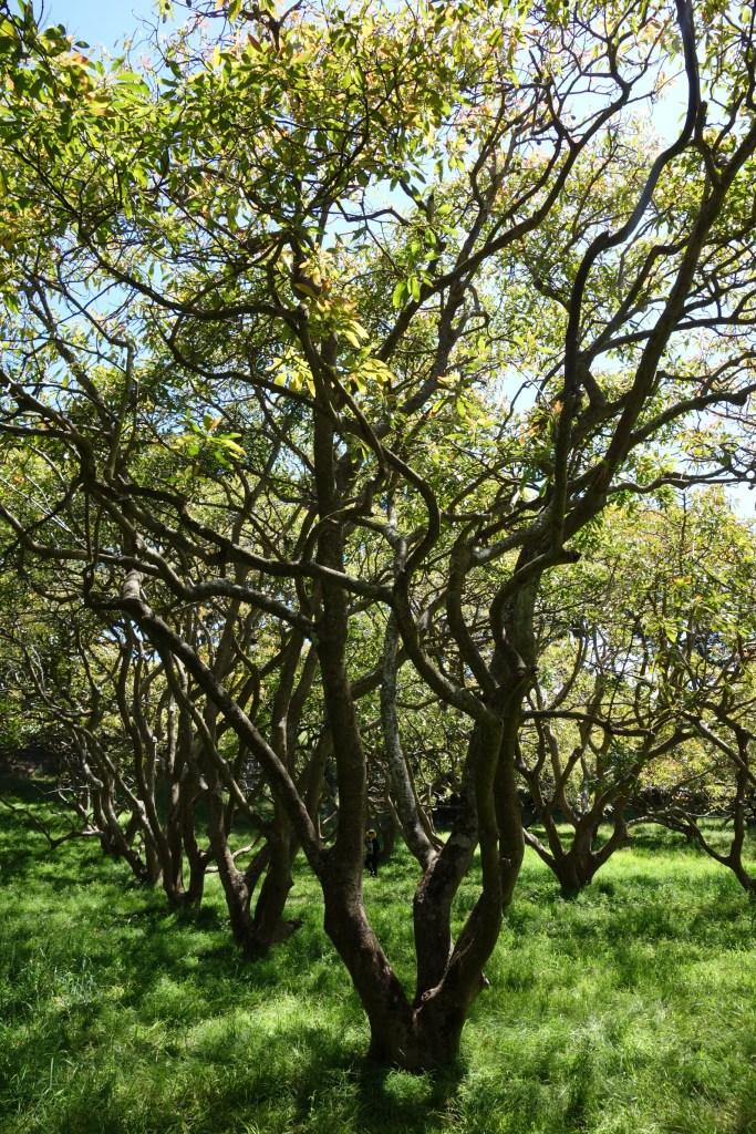 dsc07647-avocado-trees