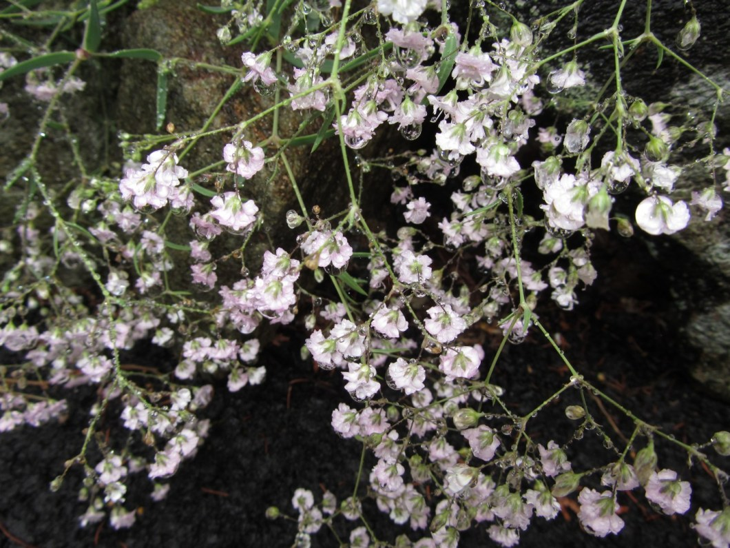 Names Of Small White Flowers Kayaflower