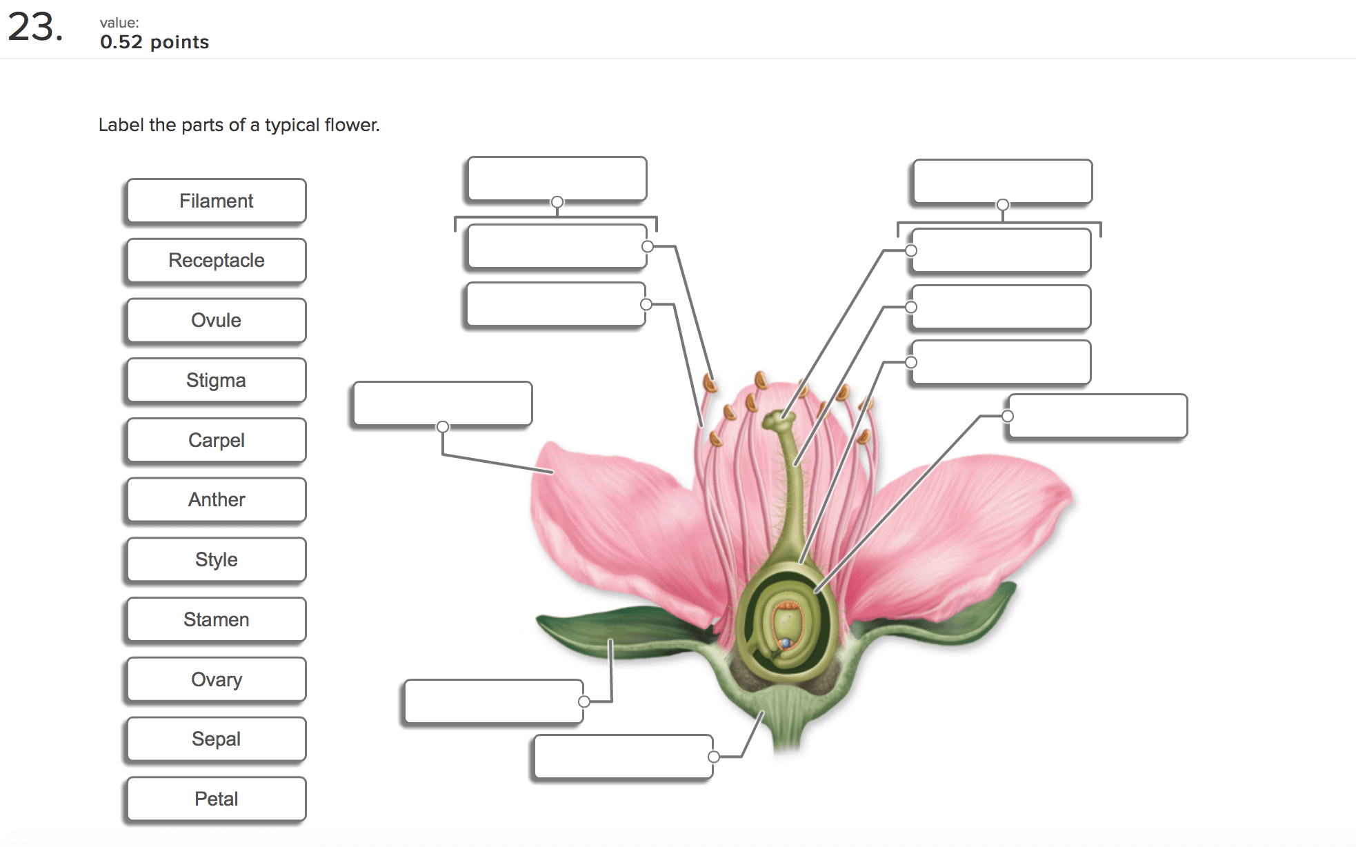 Blank Image Of Parts A Flower