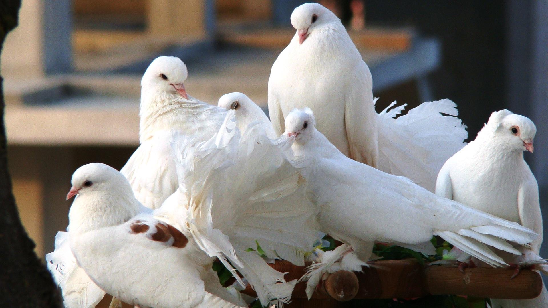 Free Photo Group Of Birds