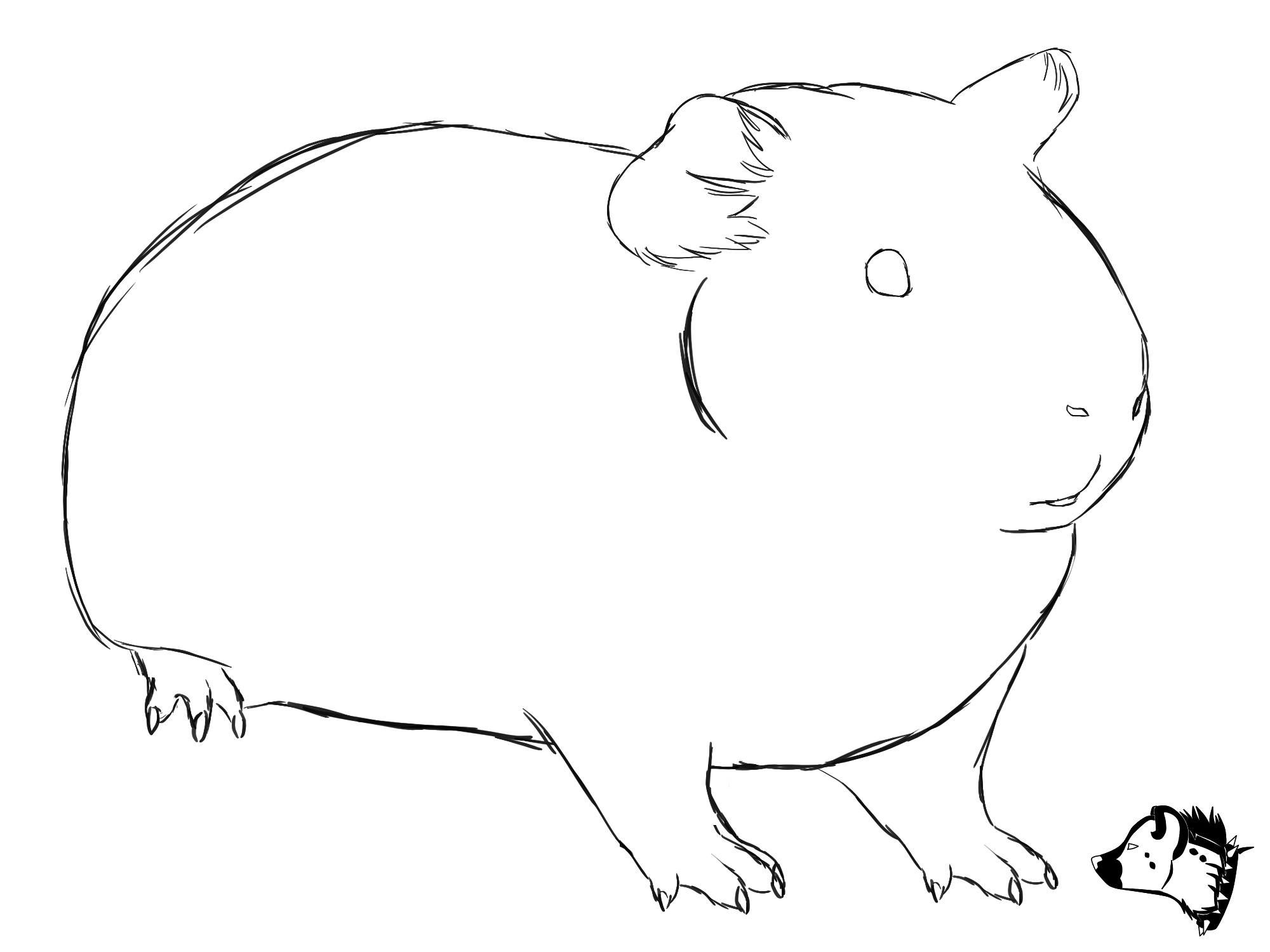 Free Photo Guinea Pig Drawing