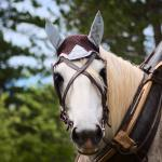 Free Photo Selective Focus Photography Of White Horse Animal Animal Photography Cavalry Free Download Jooinn
