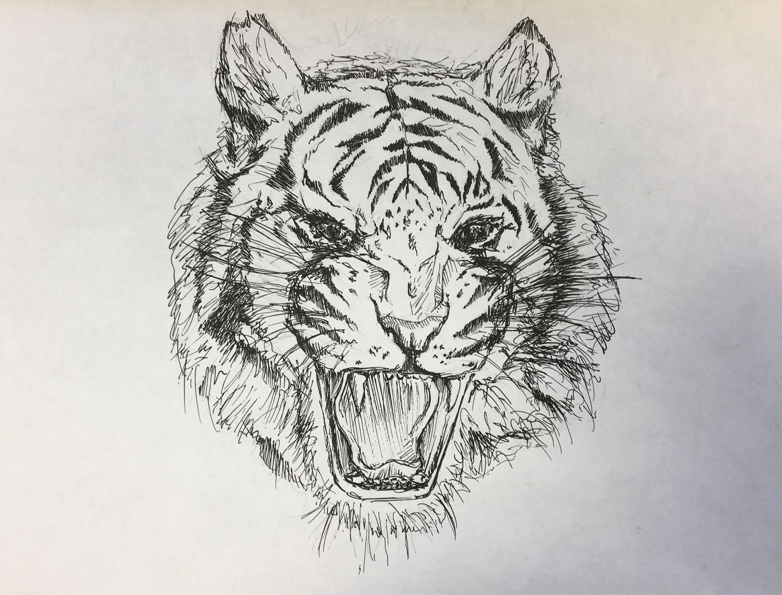 Free Photo Tiger Sketch Animal Artwork Cat Free Download Jooinn